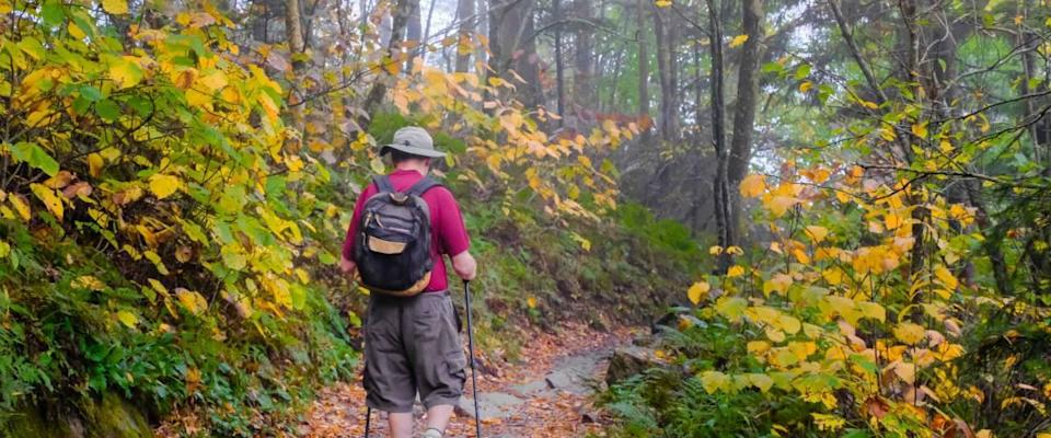 Senior man hiking on Appalachian Trail in Smoky Mountains National Park, Tennessee, on misty day in fall